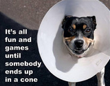 Fun and Games Dog In Cone Tin Sign Tin Sign