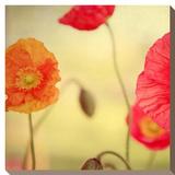 La Vie en Rose Stretched Canvas Print by Alicia Bock