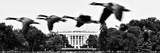 Theft of a Colony of Wild Geese over the White House South Lawn, Washington D.C, US Photographic Print by Philippe Hugonnard
