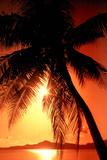 Ocean Tropical Sunset Palm Tree Poster beach Print