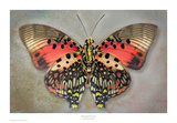 Shining Red Charaxes Prints by Richard Reynolds