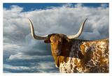 Bétail à longues cornes du Texas Affiches par Robert Dawson