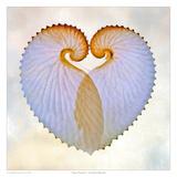 Paper Nautilus I Poster af Richard Reynolds