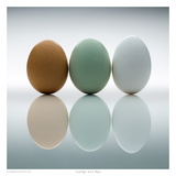 Good Eggs Posters by David Wagner