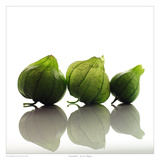 Tomatillo 03 Prints by David Wagner
