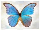 Godarts Morpho Prints by Richard Reynolds