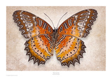 Red Lacewing Poster by Richard Reynolds