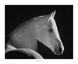 White Shadow Art by Robert Dawson