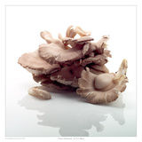 Oyster Mushrooms Prints by David Wagner