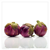 Italian Heirloom Eggplant Print by David Wagner