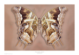 Charaxes Analava underside Posters by Richard Reynolds
