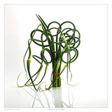 Garlic Scape Posters by David Wagner
