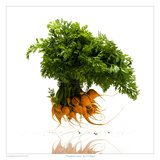 Thumbnail Carrots Prints by David Wagner