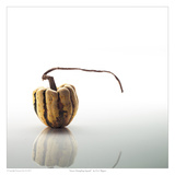 Sweet Dumpling Squash Posters by David Wagner
