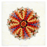 Sea Urchin 2 Prints by Richard Reynolds