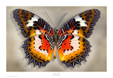 Malay Lacewing Prints by Richard Reynolds