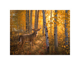 Whitetail in Aspens Giclee Print by Greg Alexander