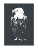 Eagle Posters by Jason Laurits