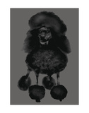 Poodle Posters by Jason Laurits