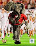 The University of Alabama Crimson Tide Mascot Photo