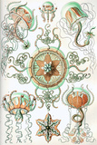 Trachomedusae Nature by Ernst Haeckel Posters