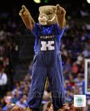 University of Kentucky Wildcats Mascot Photo