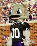 Texas Christian University Horned Frogs Mascot 2003 Photo