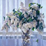 White Lilac Giclee Print by Valeriy Chuikov