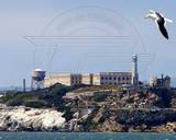 Alcatraz Federal Penitentiary Photo