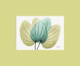 X-Ray Citrus Orchid Prints by Albert Koetsier