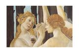 Primavera Reproduction procédé giclée par Sandro Botticelli