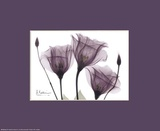X-Ray Blackberry Gentian Prints by Albert Koetsier