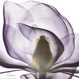Purple Magnolia Poster von Albert Koetsier