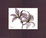 Albert Koetsier - X-Ray Blackberry Lillies - Tablo