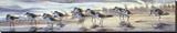 Shoreline Sanderlings Reproduction transférée sur toile par Matthew Hillier