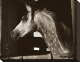 Tim's Mare Stretched Canvas Print by Barry Hart