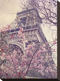 April in Paris Stretched Canvas Print by Dawne Polis