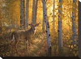 Whitetail in Aspens Stretched Canvas Print by Greg Alexander