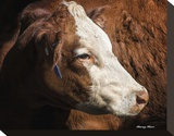 Cow 3 Stretched Canvas Print by Barry Hart