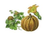 Pumpkin Giclee Print by Giglioli E.