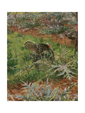 Spring Giclee Print by Adolfo Tommasi