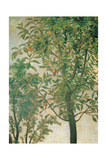Madonna of the Orange Tree Reproduction procédé giclée par Cima da Conegliano