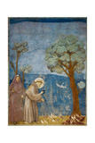 Preaching to the Birds Art by  Giotto di Bondone