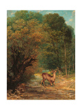 Hunted Roe Deer on the Alert, Spring Posters by Gustave Courbet