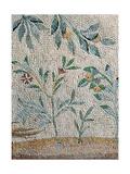 Vegetable decoration Giclee Print