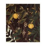 Primavera, Oranges and  blossoms Poster von Sandro Botticelli