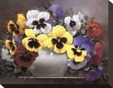 Rainbow of Pansies Stretched Canvas Print by Victor Santos