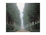 Walk in the Boboli gardens know as the Viottolone, 16th c., Florence, Italy. Prints by  Tribolo