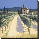 Vineyard Shadows Stretched Canvas Print by David Short
