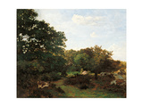 Forest of Fontainebleau Posters by Frederic Bazille